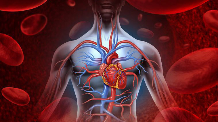 Testosterone, Cardiovascular Health & Diabetes