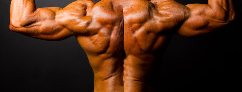 Back to Back : Back Building Exercises