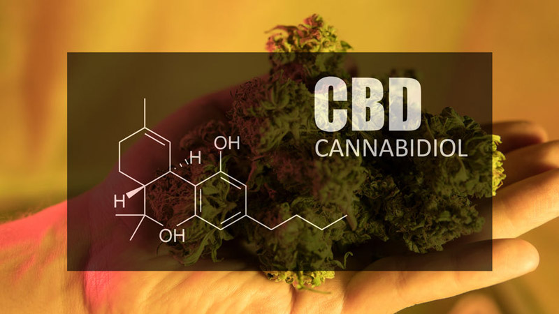 CBD Supplement for Weight Loss